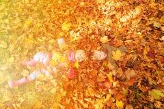 Enfants ayant l'amusement dans des feuilles de chute d'automne Image stock