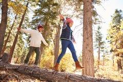 Enfants ayant l'amusement et équilibrant sur l'arbre dans la région boisée d'automne Images stock