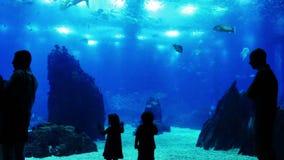 Enfants chez l'Oceanarium banque de vidéos
