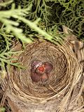 Enfants d'oiseaux photos libres de droits