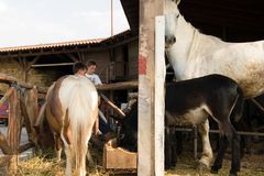 Enfants dans le ranch de pays photo libre de droits