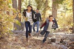 Enfants dans une forêt fonctionnant à l'appareil-photo, père regardant dessus photographie stock libre de droits
