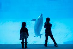 Enfants de silhouette observant le dauphin dans l'aquarium photo stock