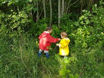 Enfants en bas âge mignons sélectionnant des baies de forêt Images libres de droits