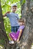 Enfants garçon et fille sur un arbre en été Image stock