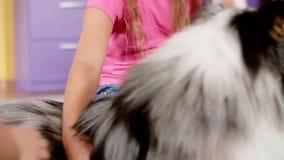 Enfants heureux frottant un chien clips vidéos