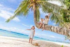 Enfants heureux - garçon et filles - sur le palmier, tropical Image libre de droits