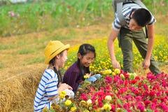Enfants heureux moissonnant des fleurs de jardin Photographie stock libre de droits