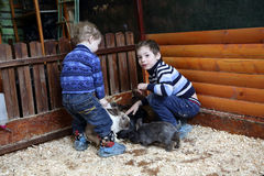 Enfants jouant avec des lapins Images stock