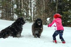 Enfants jouant avec le grand eau-chien dans la neige Images stock