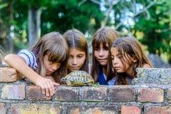 Enfants jouant avec une tortue photographie stock libre de droits