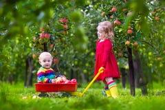 Enfants jouant dans le jardin de pommier Photo stock
