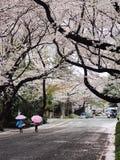 Enfants marchant sous des arbres de fleurs de cerisier au Japon Photographie stock libre de droits