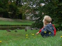 Enfants observant sur un canard Photographie stock