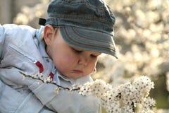 Enfants parmi des branchements de flowerings des arbres Photos libres de droits