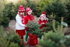 Enfants sélectionnant l'arbre de Noël Achat de cadeaux de Noël Image stock