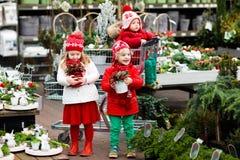 Enfants sélectionnant l'arbre de Noël Achat de cadeaux de Noël Photos stock