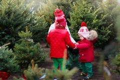 Enfants sélectionnant l'arbre de Noël Achat de cadeaux de Noël Images libres de droits