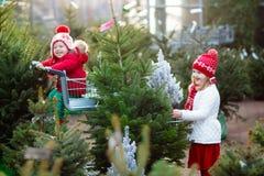 Enfants sélectionnant l'arbre de Noël Achat de cadeaux de Noël Images stock