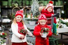 Enfants sélectionnant l'arbre de Noël Achat de cadeaux de Noël Photo stock