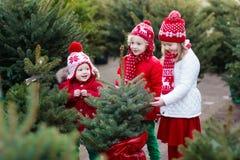 Enfants sélectionnant l'arbre de Noël Achat de cadeaux de Noël Photographie stock libre de droits