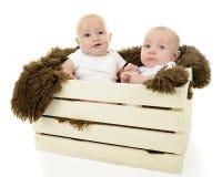 Enfermé dans une boîte vers le haut des bébés Photographie stock libre de droits