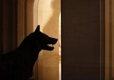 Enfermé par un loup Photographie stock