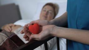 Enfermera que lleva a cabo el juguete-corazón en manos en fondo de la mujer enferma en lecho de enfermo, amabilidad metrajes