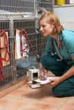 Enfermera veterinaria Checking On Animals en jaulas Imagen de archivo libre de regalías