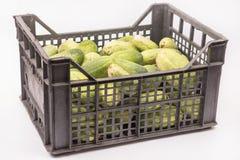 Enfermez dans une boîte complètement avec les concombres frais au-dessus du fond blanc Photographie stock libre de droits
