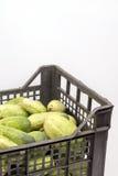 Enfermez dans une boîte complètement avec les concombres frais au-dessus du fond blanc Photo libre de droits