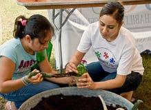 Enfiando uma planta na terra Fest Fotos de Stock