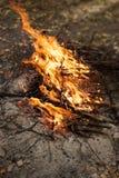 Enflammer le feu Incendie Le feu dans les branches brûlantes de forêt images stock