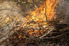Enflammer le feu Incendie Le feu dans les branches brûlantes de forêt photographie stock libre de droits
