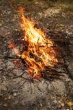 Enflammer le feu Incendie Le feu dans les branches brûlantes de forêt photos libres de droits