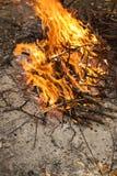 Enflammer le feu Incendie Le feu dans les branches brûlantes de forêt images libres de droits
