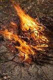 Enflammer le feu Incendie Le feu dans les branches brûlantes de forêt photographie stock