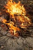 Enflammer le feu Incendie Le feu dans les branches brûlantes de forêt image libre de droits