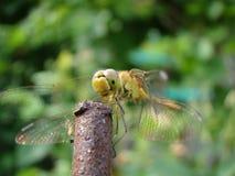enfluga som ser i en kamera Royaltyfri Bild