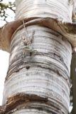 Enfoca un camaleón en árbol. Imagen de archivo libre de regalías