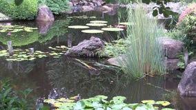 Enfoque adentro de jardín japonés ajardinado, al helecho de Maidenhair del australiano que crece en roca metrajes