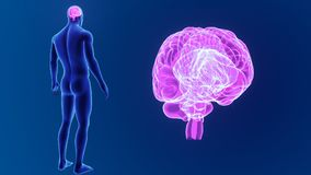 Enfoque del cerebro humano con el cuerpo
