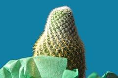 Enfoque en el cactus verde Foto de archivo