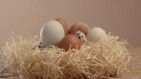 Enfoque a la jerarquía con diversos huevos Huevos de Pascua almacen de video