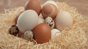 Enfoque a la jerarquía con diversos huevos Huevos de Pascua almacen de metraje de vídeo