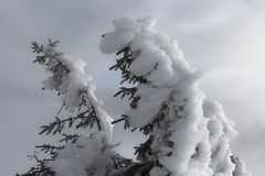 Enfrentando as condições do inverno fotografia de stock royalty free