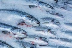 Enfriado en pescados del rojo del hielo Foto de archivo