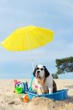 Enfriamiento abajo para el perro en la playa Fotografía de archivo libre de regalías