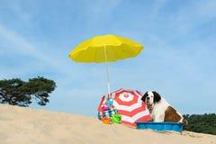 Enfriamiento abajo para el perro en la playa Fotografía de archivo