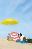 Enfriamiento abajo para el perro en la playa Imágenes de archivo libres de regalías